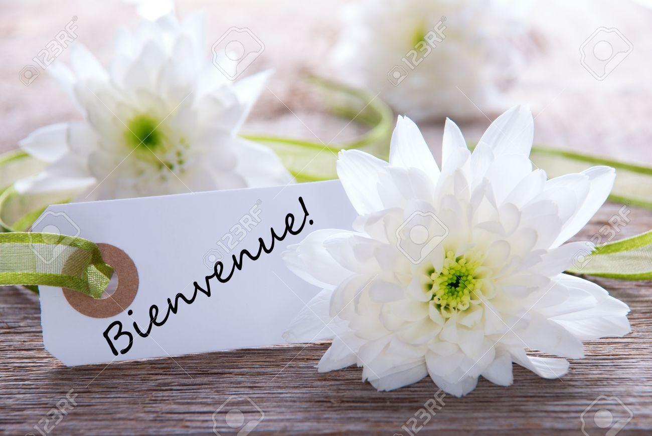 Hey tout le monde... Je me présente ???? 25422048-white-label-avec-des-fleurs-blanches-et-le-mot-fran%C3%A7ais-qui-signifie-bienvenue-bienvenue
