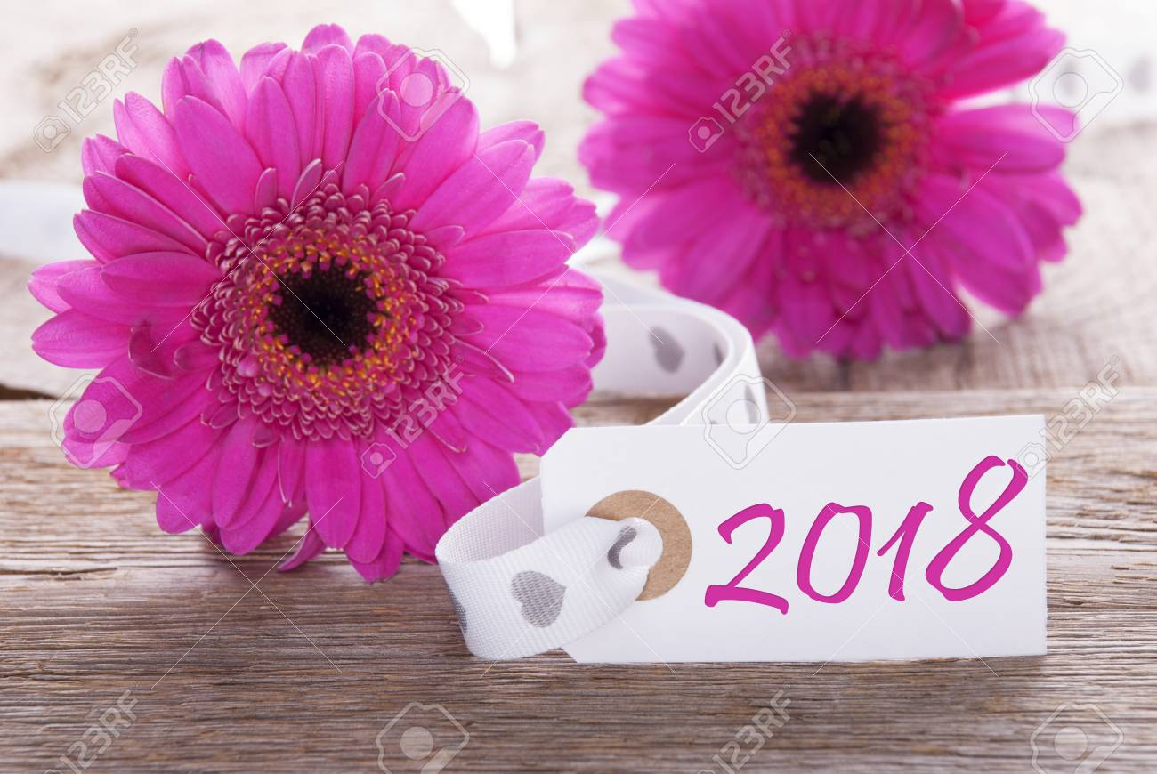 Label with english text 2018 for happy new year greetings pink label with english text 2018 for happy new year greetings pink spring gerbera blossom m4hsunfo