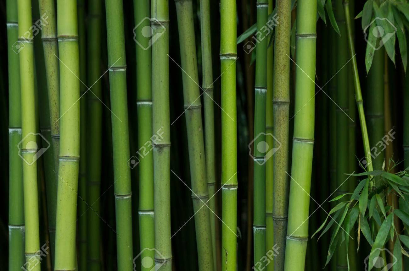 Bamboo Forest. Nature green background - 34786797