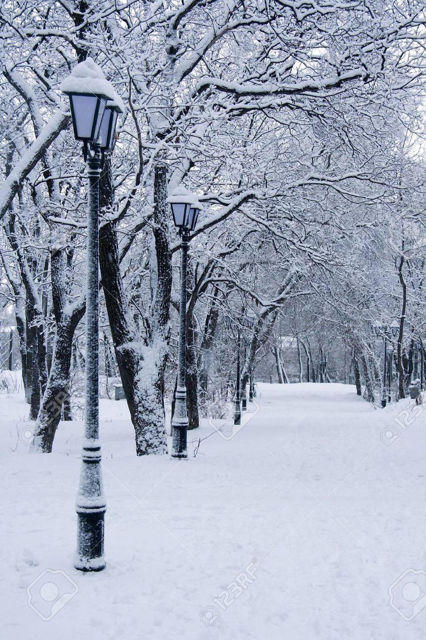 beauty white winter snow landscape Stock Photo - 4919860
