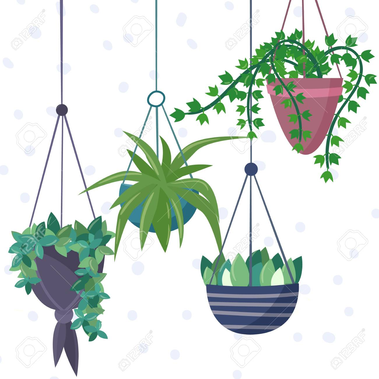 Hanging House Plants And Flowers In Pots Royalty Free Cliparts Vectors And Stock Illustration Image 98517429