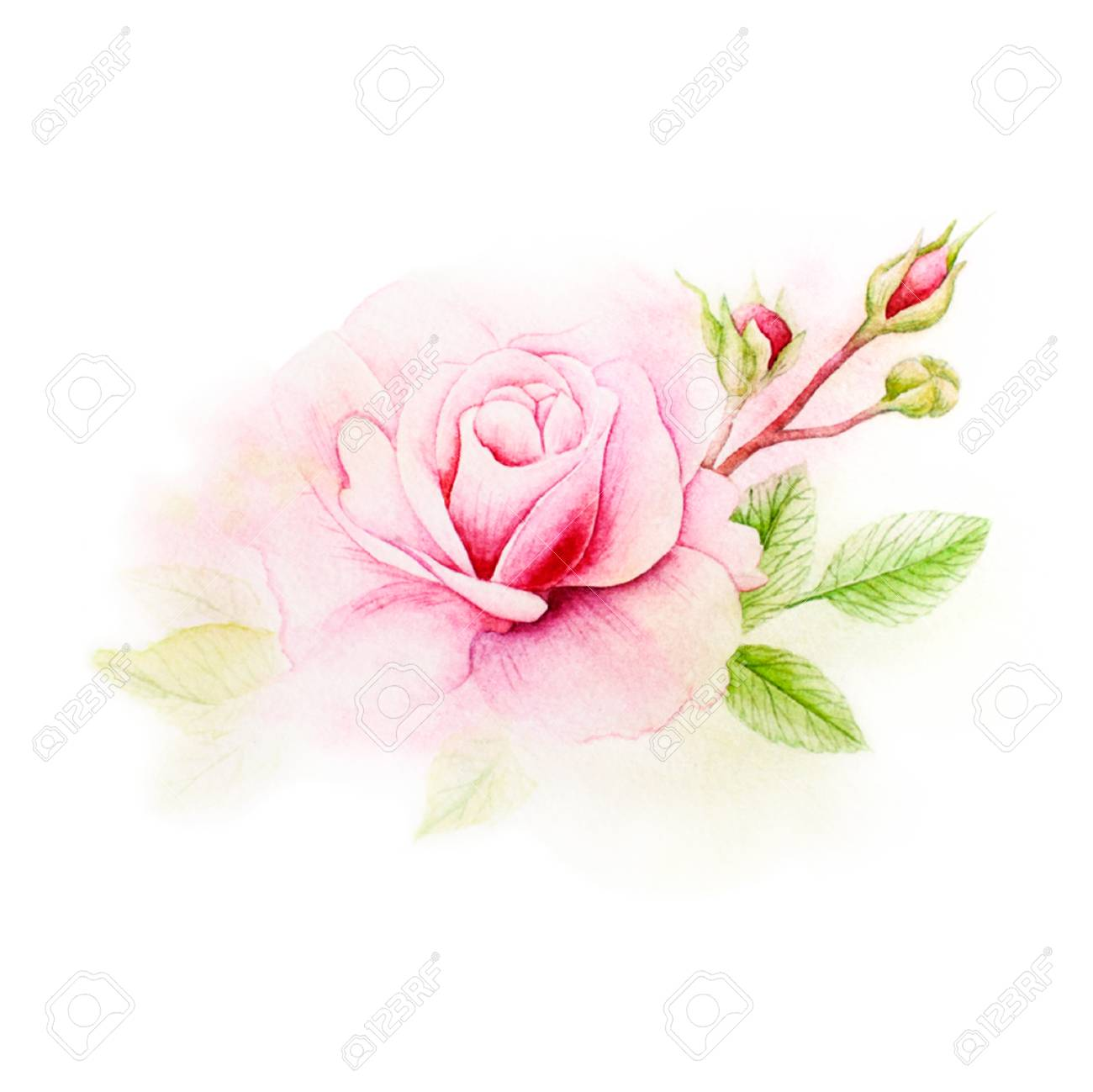 Background Texture Of Watercolor Postcard Pink Rose Picture