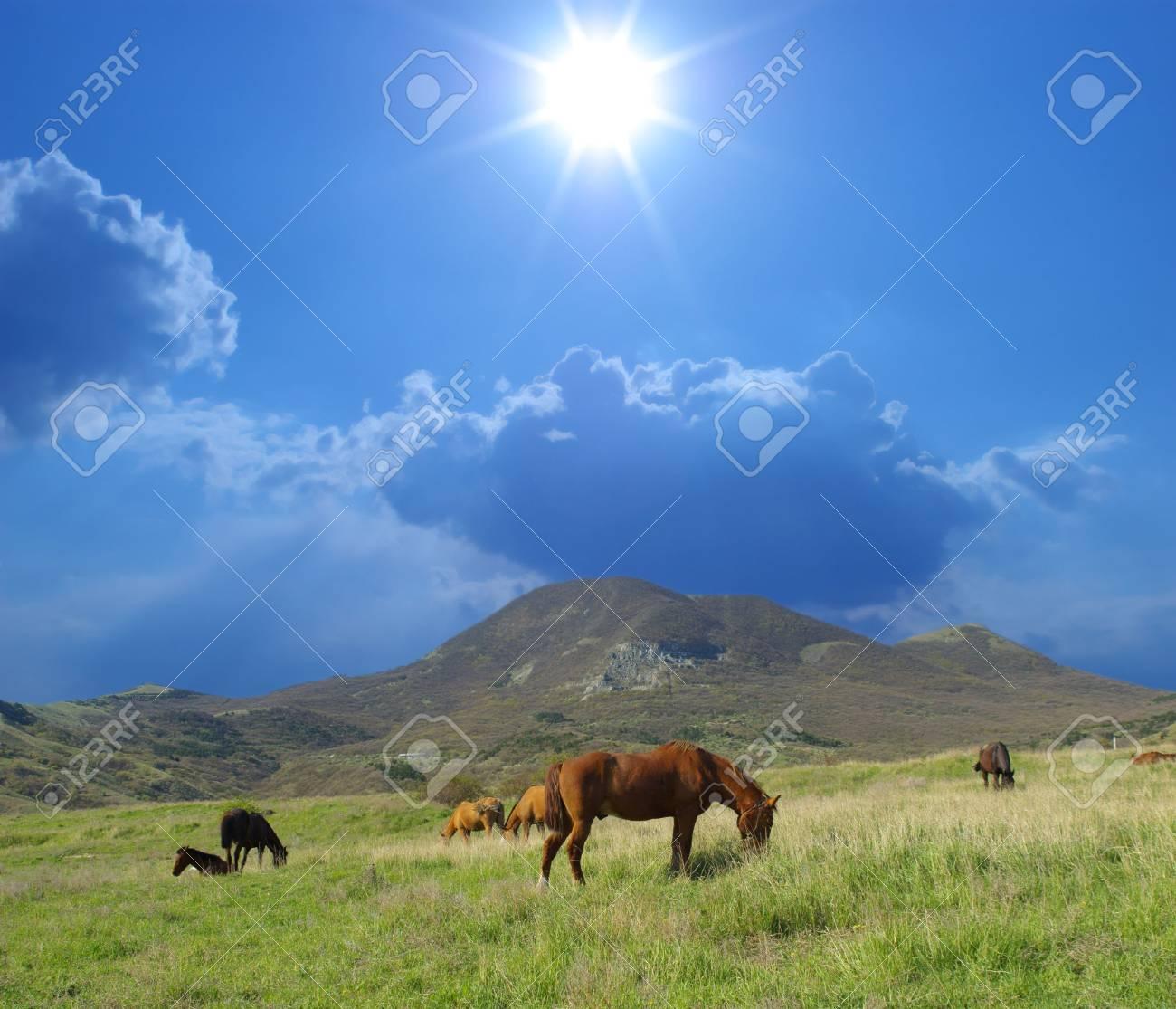 Horses on green meadow against sunny sky Stock Photo - 4729086