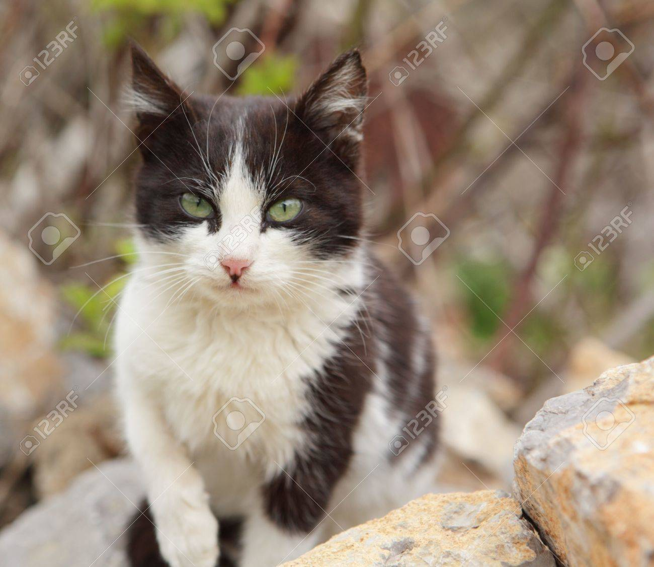 portrait of small pussy cat stock photo, picture and royalty free