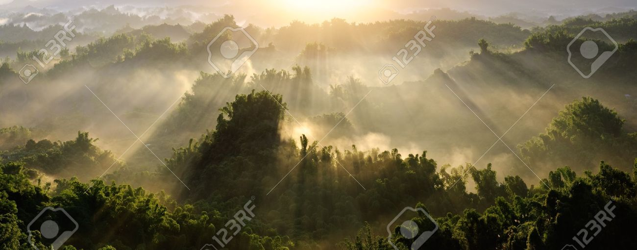 Forest morning with golden sunlight in countryside in Taiwan, Asia. Stock Photo - 7805161