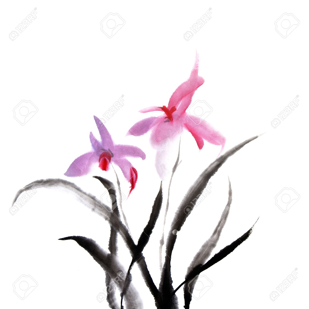Chinese painting of orchid flower on white background. Stock Photo - 9041982