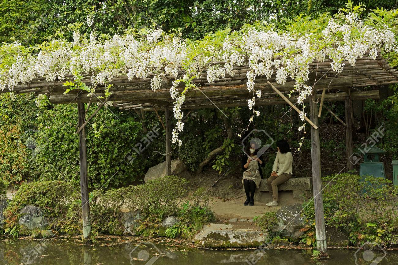 Kyoto Japan April 19th White Flowers Of Wisteria Growing
