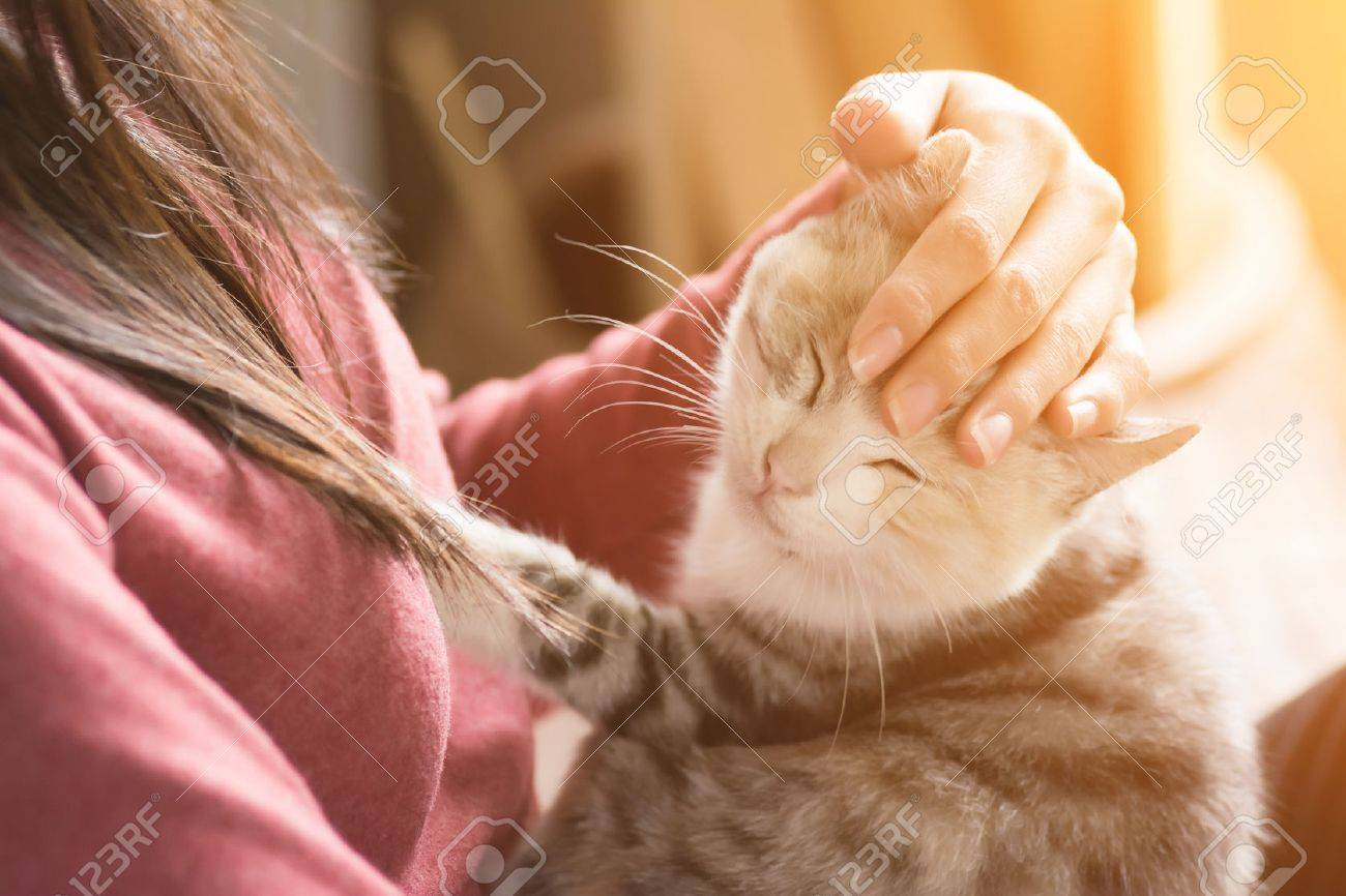 An Asian woman play with her kitten at home. - 52188334