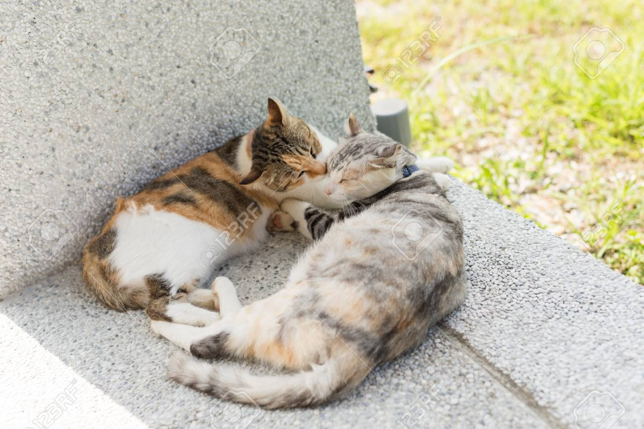 Stock Photo - young cat lick her mother for clean the ears in the outside