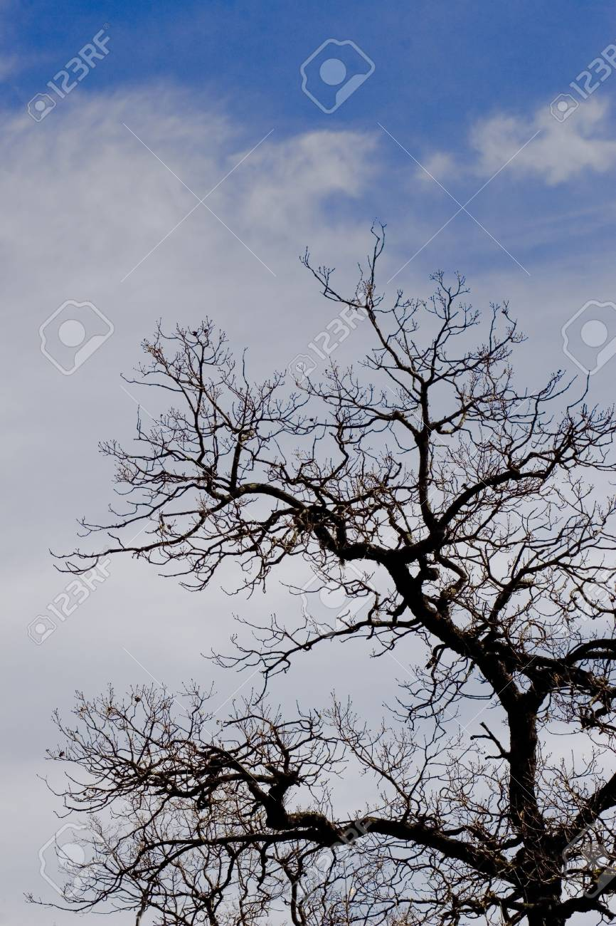 tree silhouette over intense blue sky with space for text