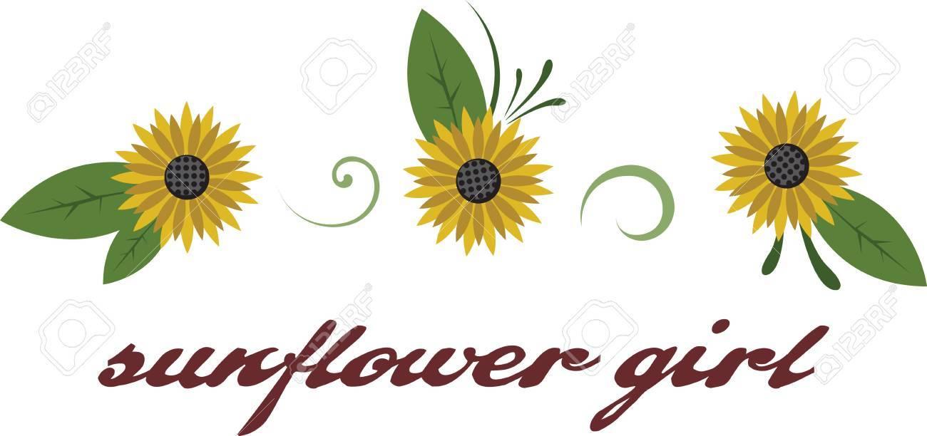 Los Girasoles Son Los Amarillos Brillantes De La Floración Completa ...