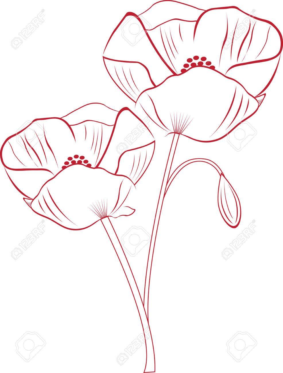 Captura La Belleza Exótica De Flores De Amapola Con Este Diseño Por ...
