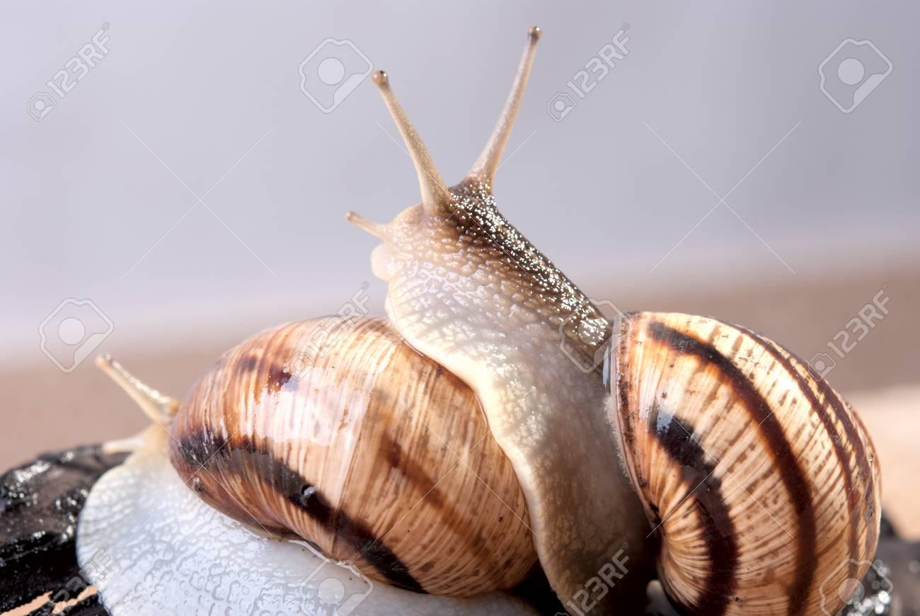 Shellfish, snail by CU on a background Stock Photo - 13385184