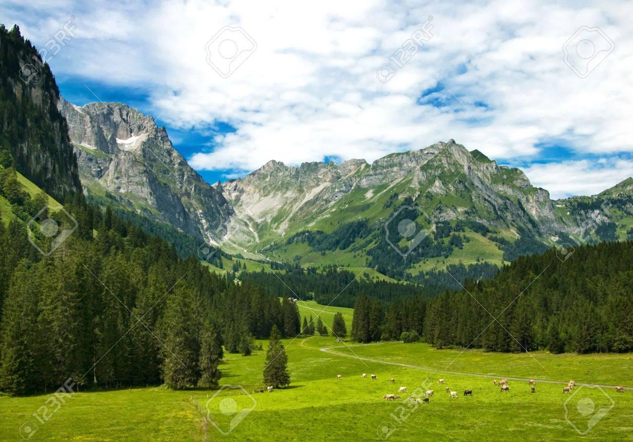 Alpine meadow in central Switzerland. Arnibach Valley, near Engelberg. Stock Photo - 7620488