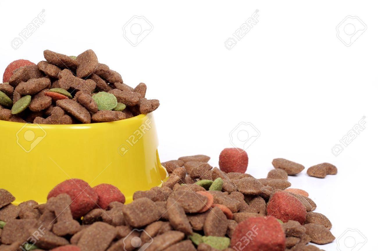 bowl of dog food isolated on white Stock Photo - 496102