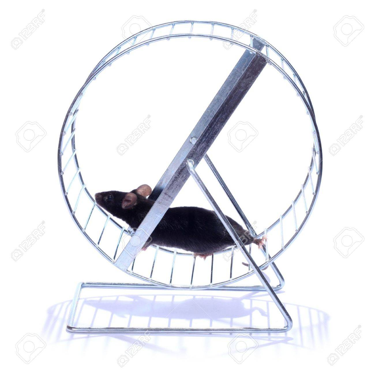 little black mouse running on an exercise wheel on white background Stock Photo - 6241540