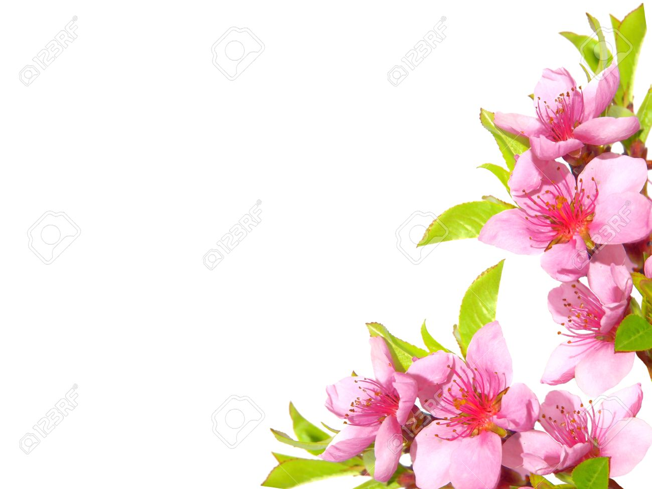 Pink Spring Flowers Border Stock Photo Picture And Royalty Free