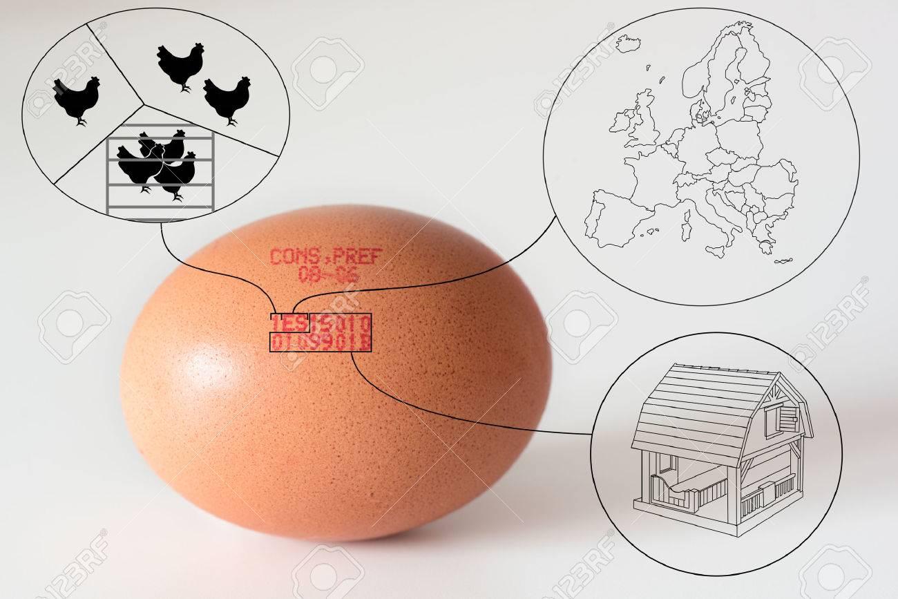 Printed Diagram Of An Egg House Wiring Diagram Symbols