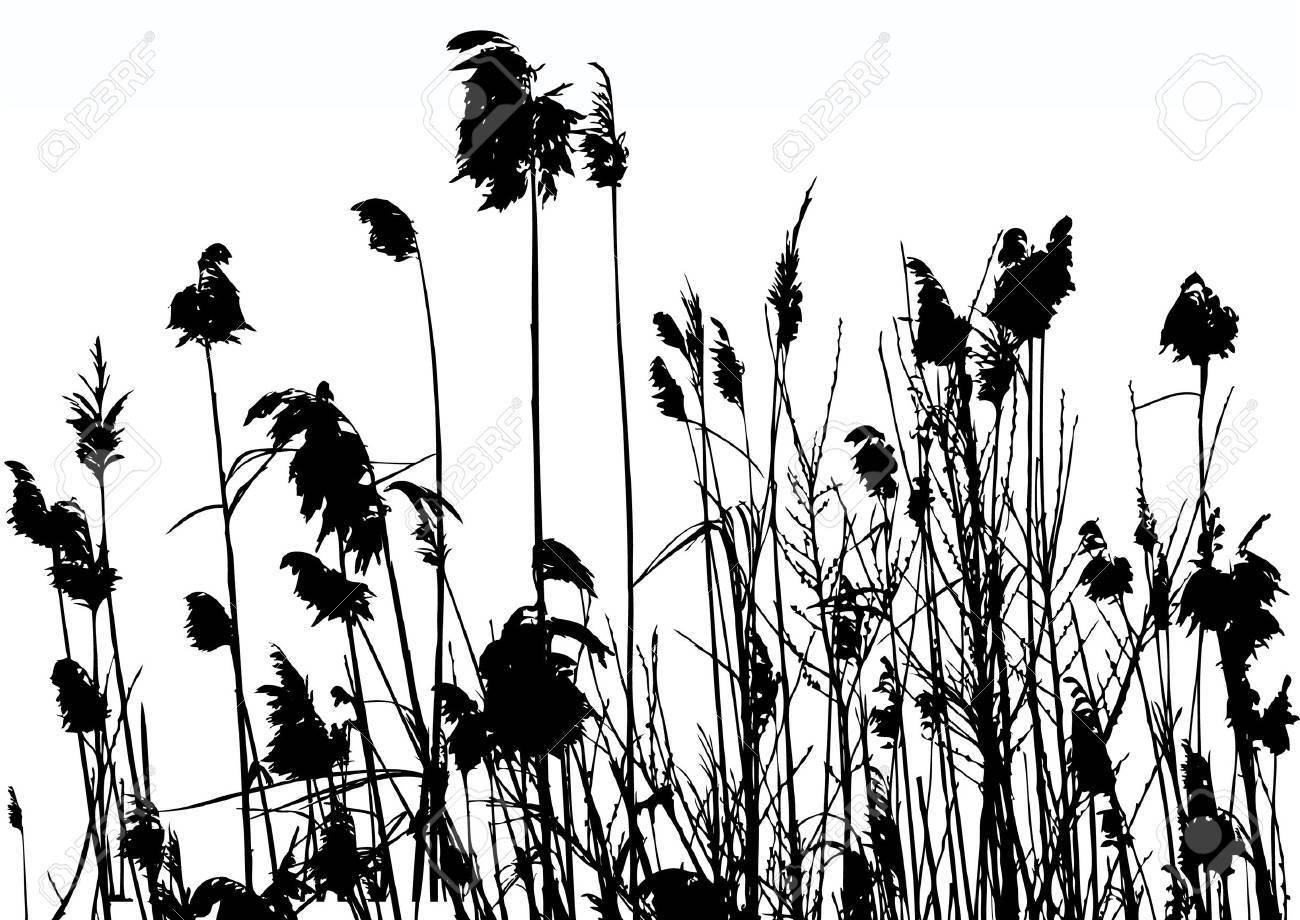 reeds Stock Vector - 8838893