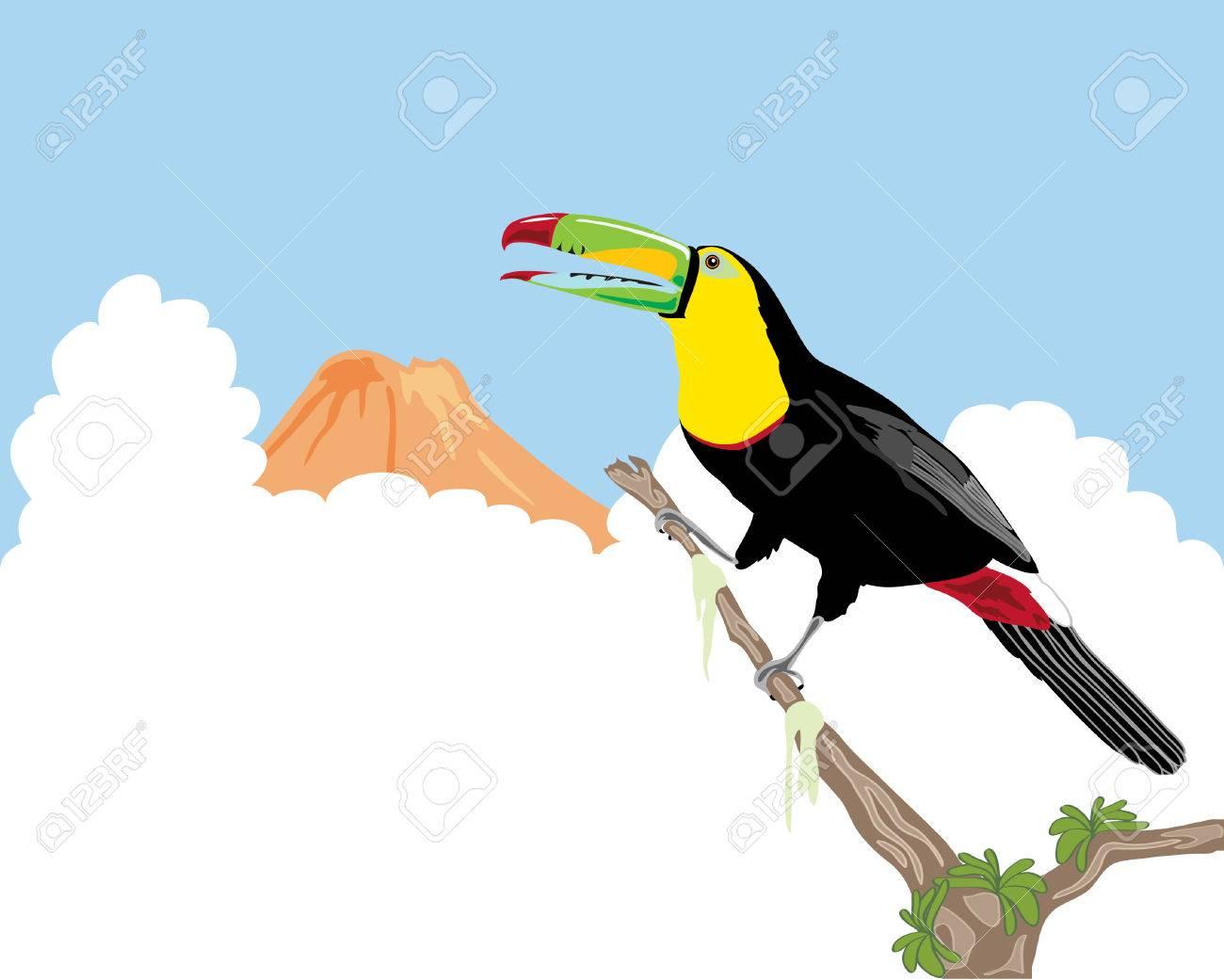 a Keel Billed Toucan