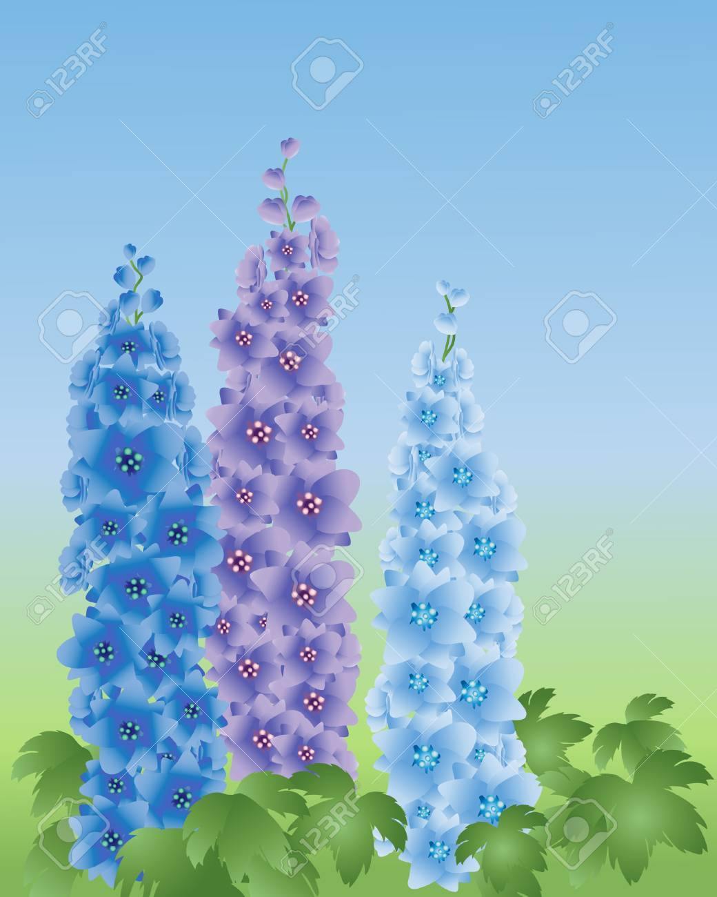an illustration of three delphinium flower spikes in shades of blue on a green and blue background Stock Vector - 8441161
