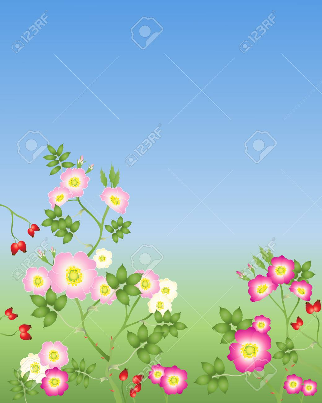 an illustration of wild roses in various shades of pink with buds and rose hips on a green and blue background Stock Vector - 8458027
