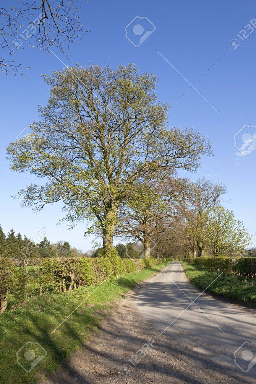 an english landscape with trees and hedgerows coming into leaf by a small country road under a blue sky Stock Photo - 9334576