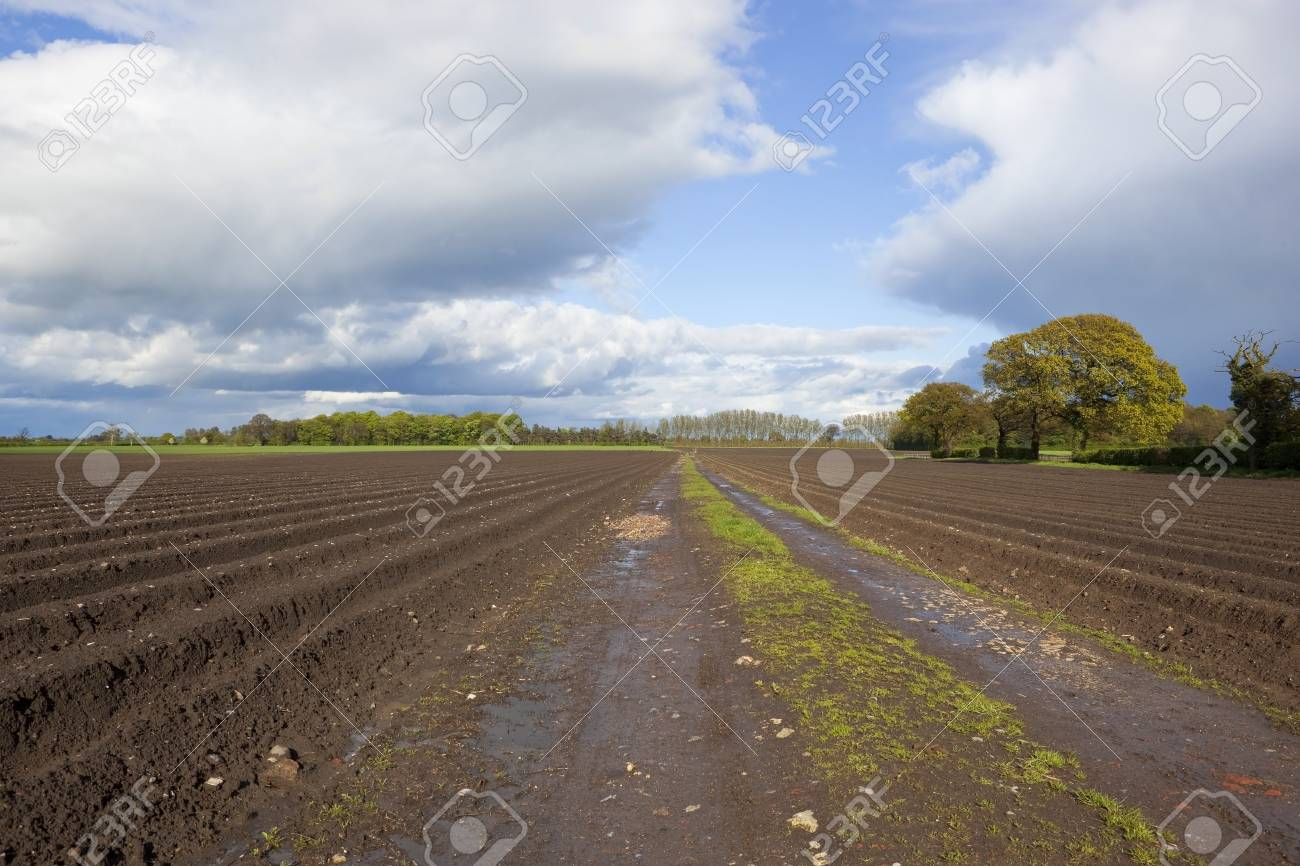 an agricultural landscape with potato rows under dramatic springtime cloudy skies Stock Photo - 13591662