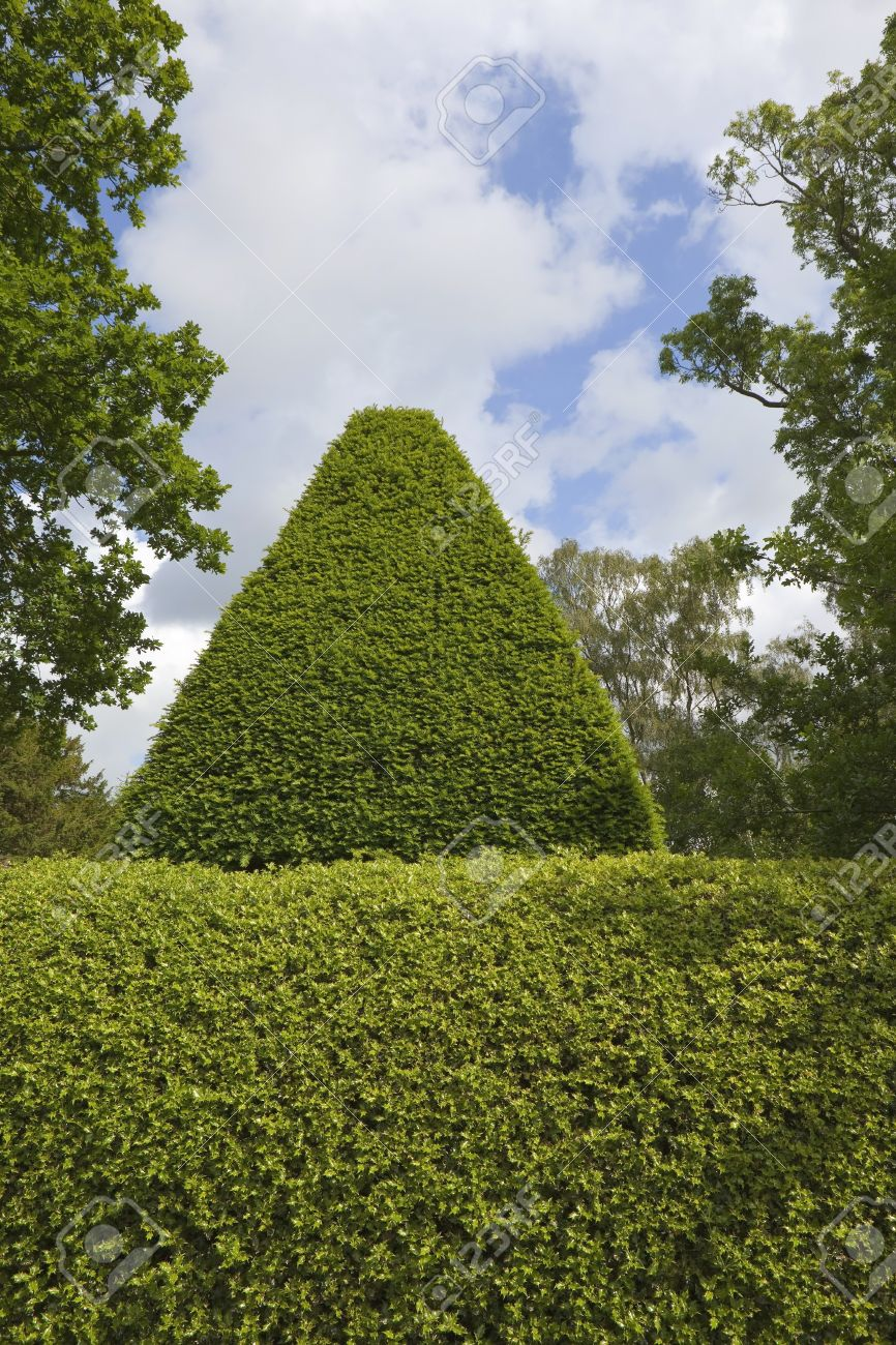 Summer Topiary Background With A Neatly Clipped Holly Hedge And Stock Photo Picture And Royalty Free Image Image 14099612