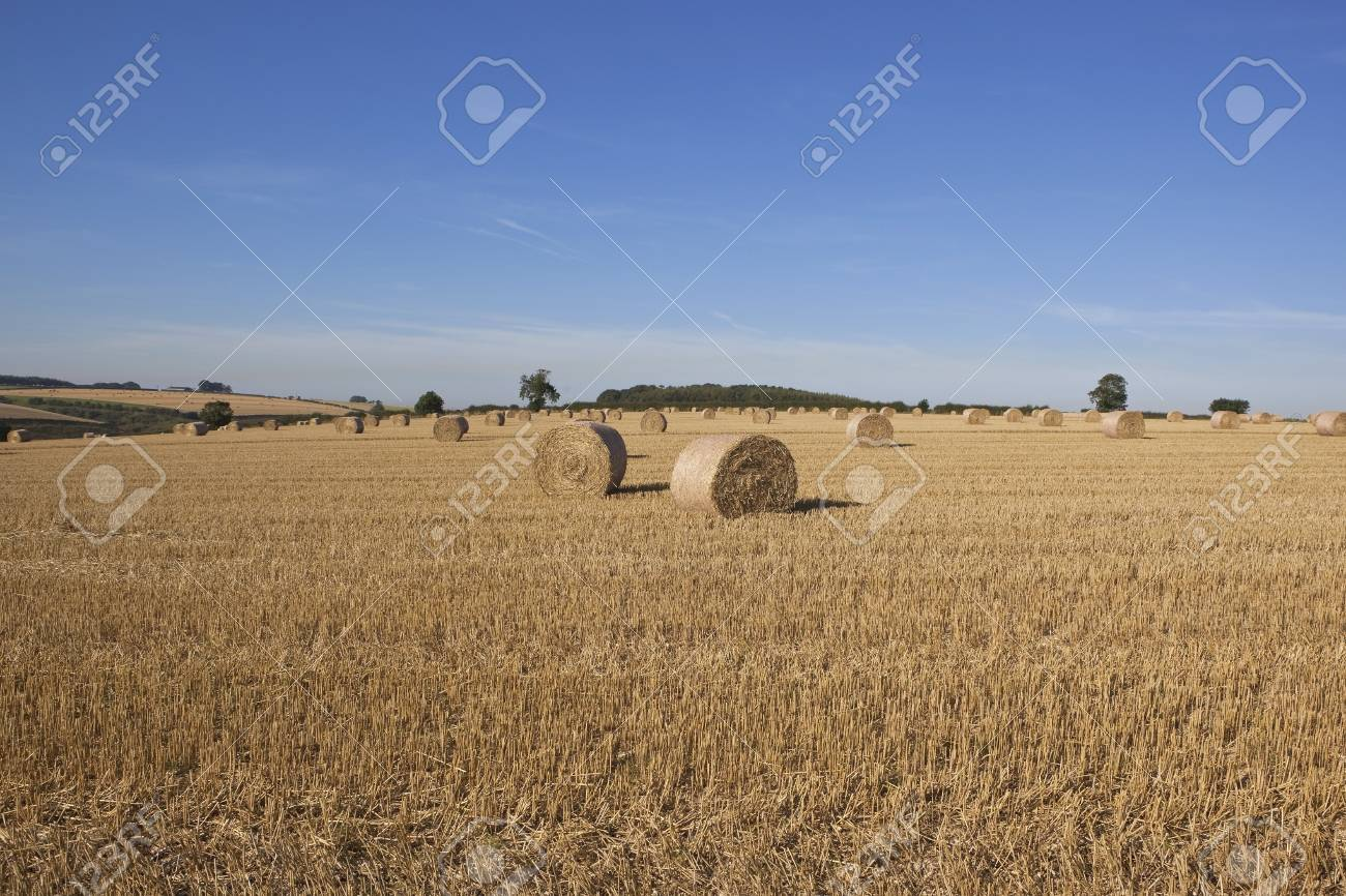 an english agricultural scene with large round straw bales in a stubble field Stock Photo - 15315601