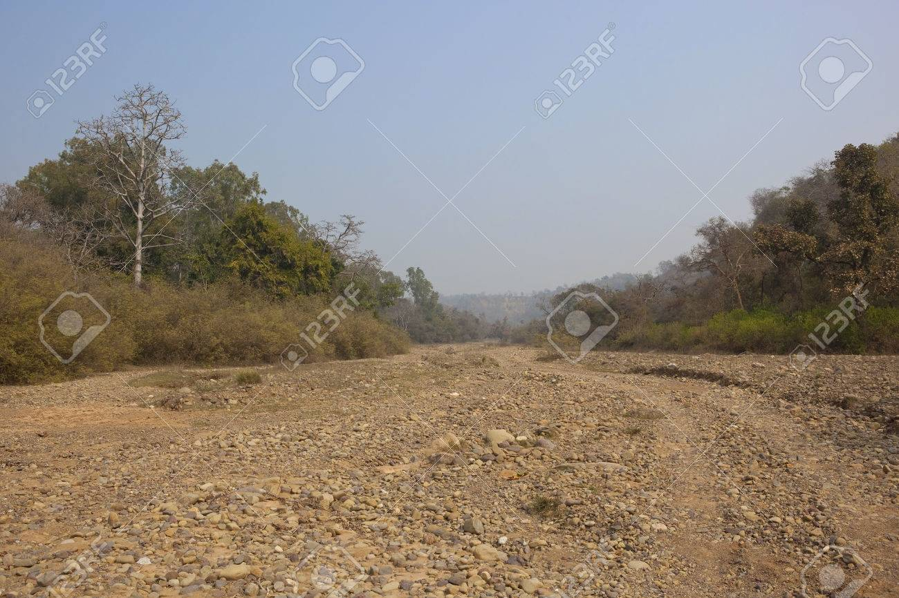 mixed forest on the banks of a dry river bed in morni hills in the indian - Banksofa