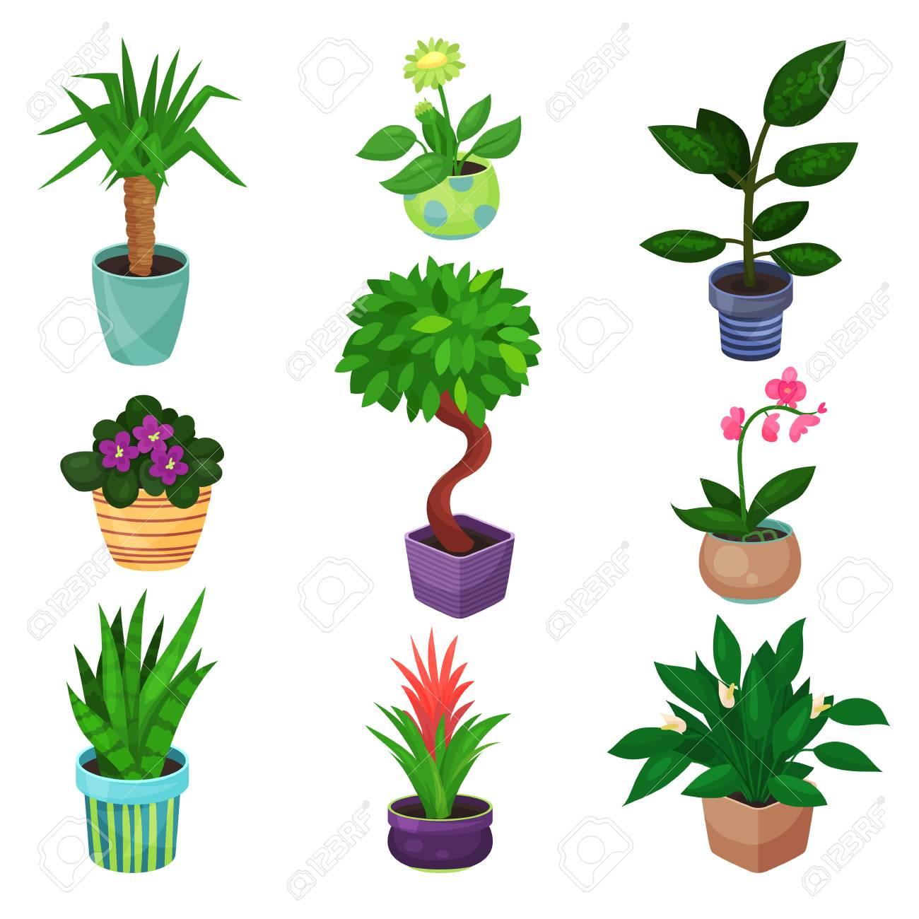 観葉植物セット植物および花のベクトル イラストのイラスト素材