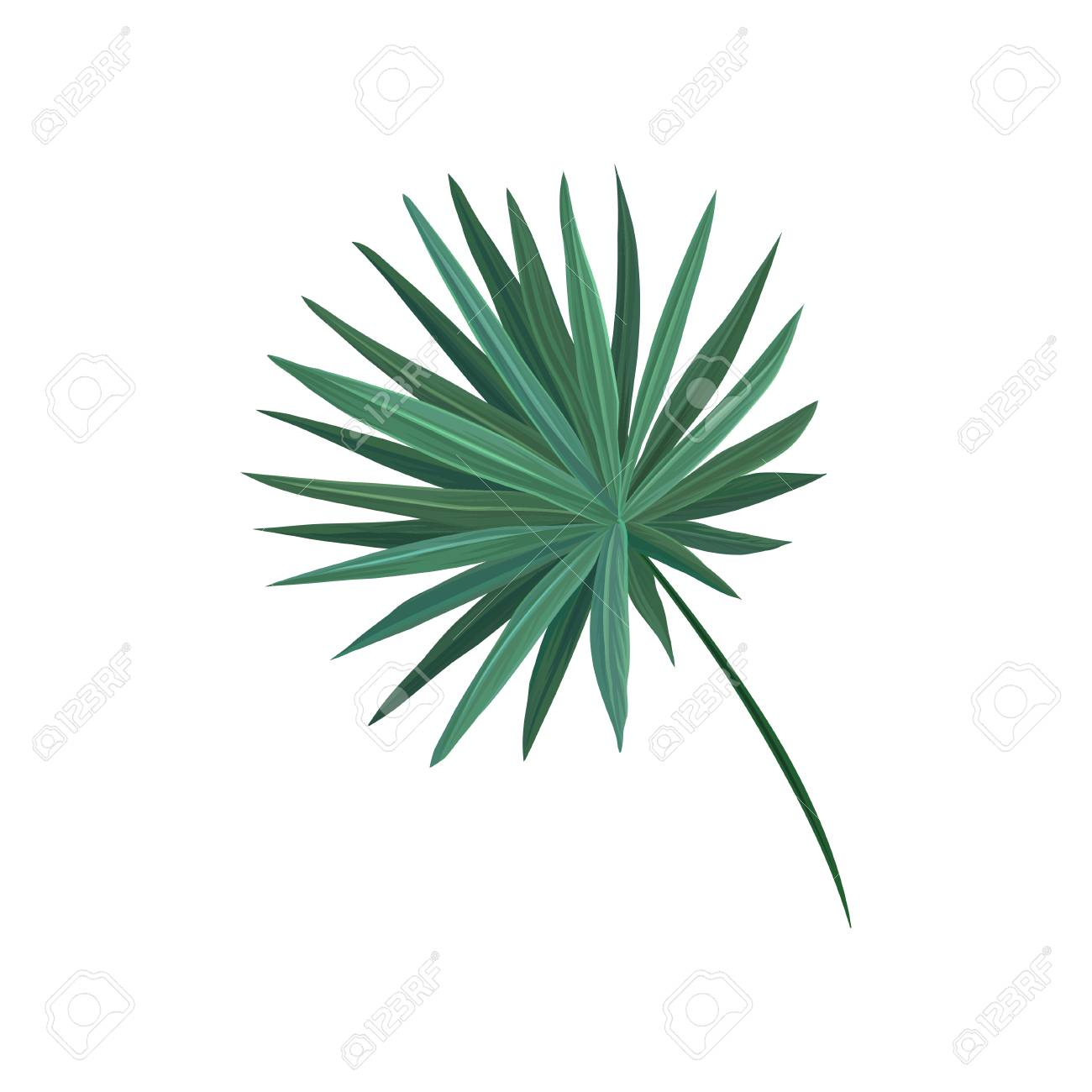 green fan palm tree leaf vector illustration royalty free cliparts rh 123rf com summer palm tree leaves vector summer palm tree leaves vector