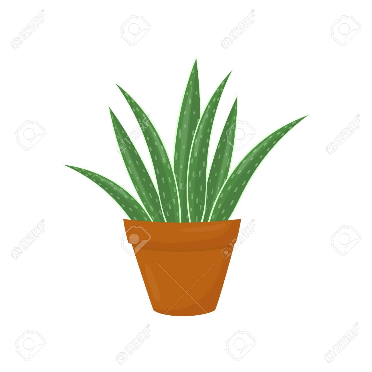 Brown Flowerpot With Aloe Vera. Green Medical Plant. Houseplant ...