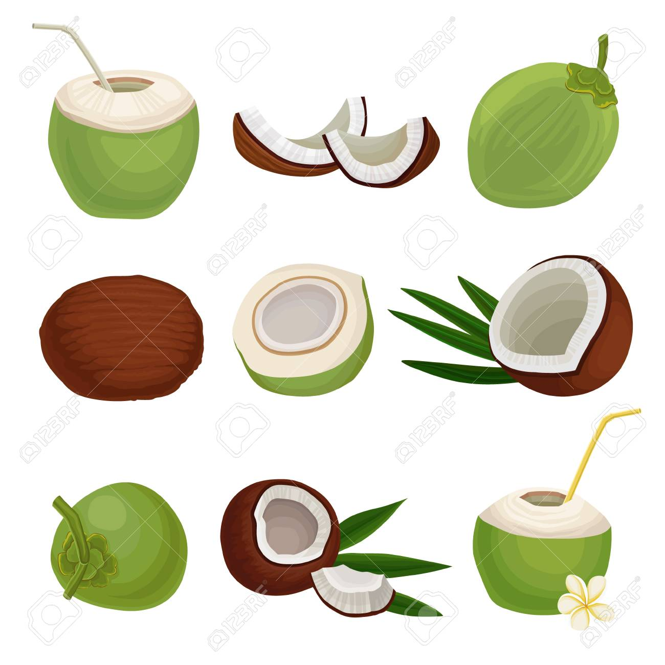 Flat vector set of fresh coconuts. Exotic cocktail. Natural and healthy food. Tropical fruit. Elements for product packaging or poster - 102160288