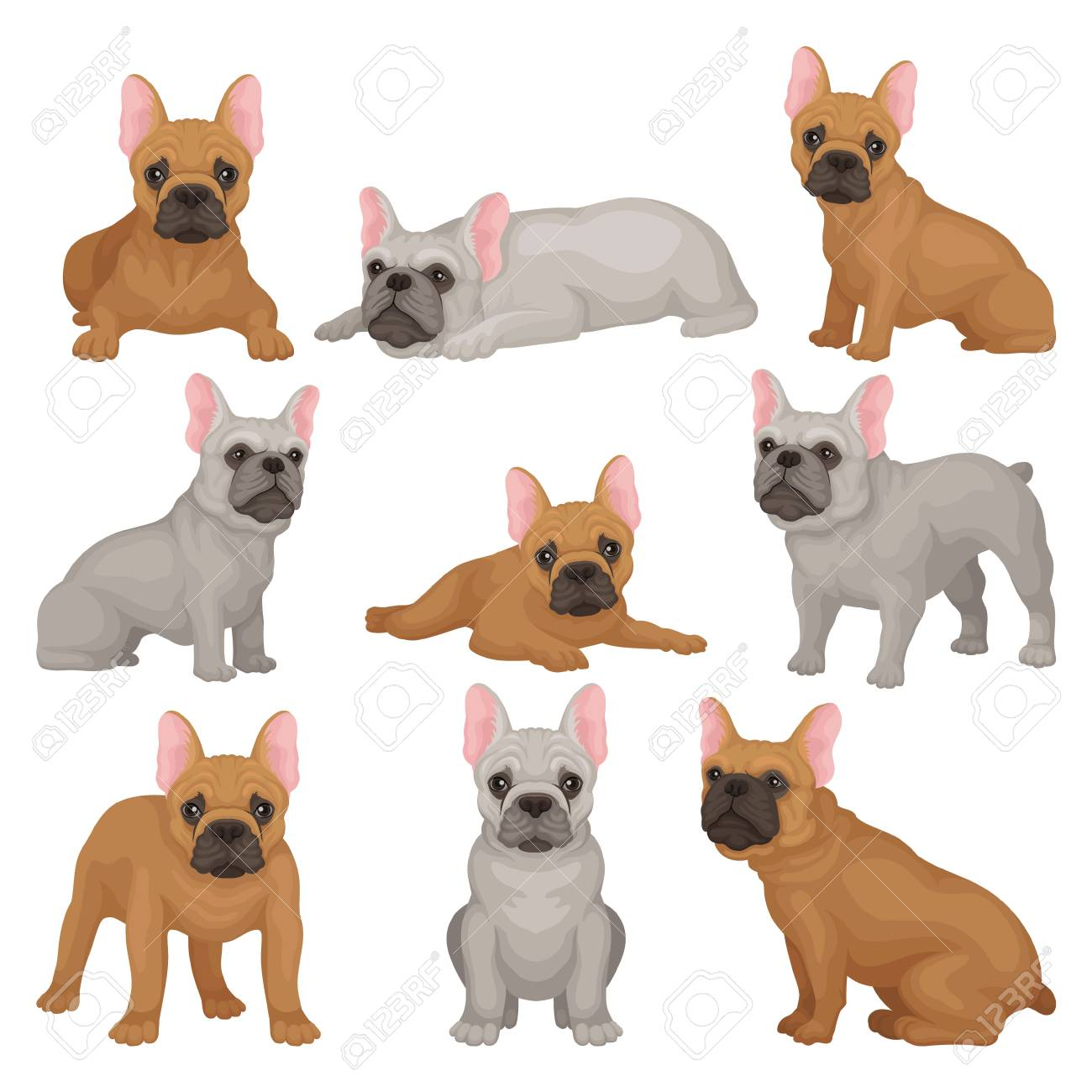Flat Vector Set Of Gray And Brown French Bulldog Puppies In Different