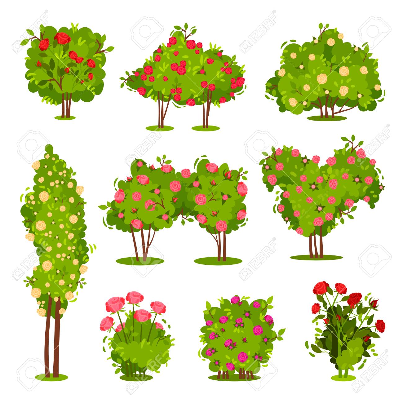 Collection of roses bushes. Flowering garden plants. Green shrubs with beautiful flowers. Landscape elements. Nature and botany theme. Colorful flat vector illustrations isolated on white background. - 124765761