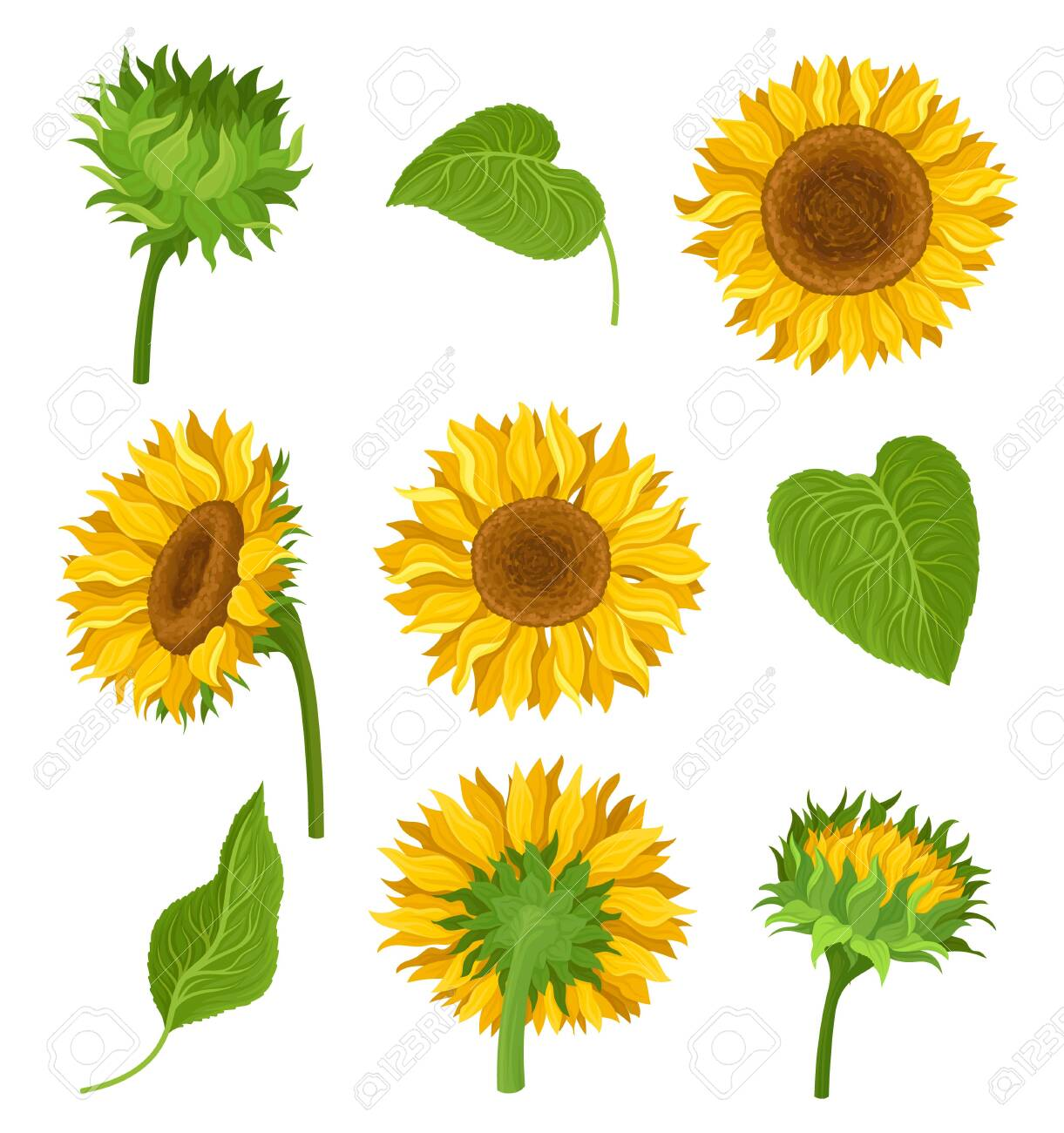 Set of illustration with sunflowers, their elements and different details. Yellow flowers, green leaves and stems, kinds of decoration with many compositions. Bright colors. cartoon illustration, isolated on white background. - 130675108
