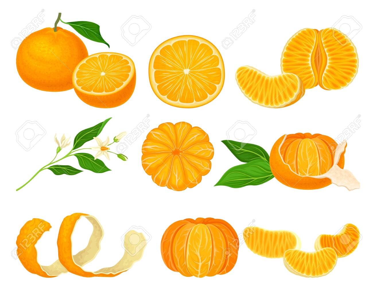Orange Mandarin Fruit Unpeeled and Skinless with Segments Vector Set. Tropical Sweet Ripe Citrus Fruit Concept - 144323378