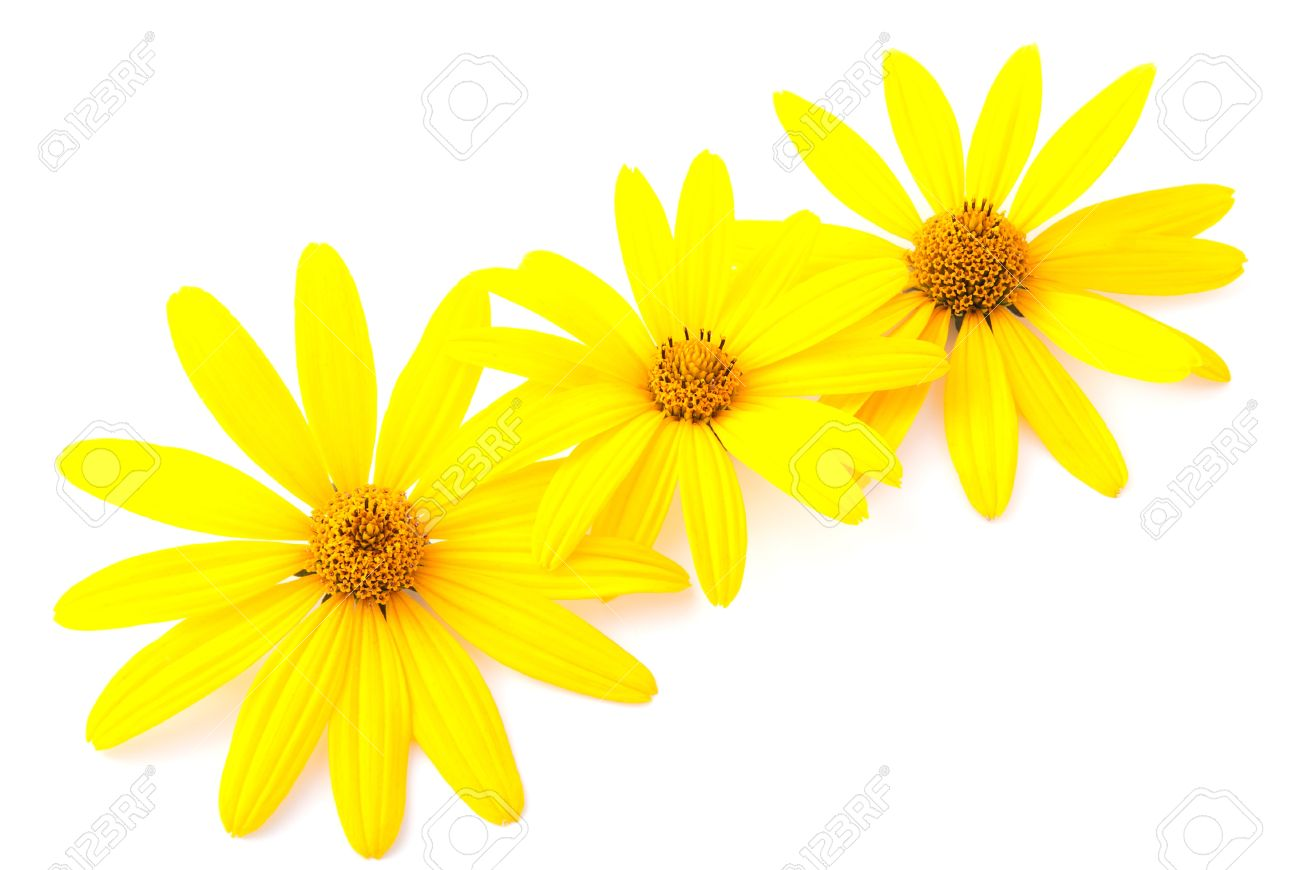 Yellow Flowers Ornament For The Postcard Isolated On White
