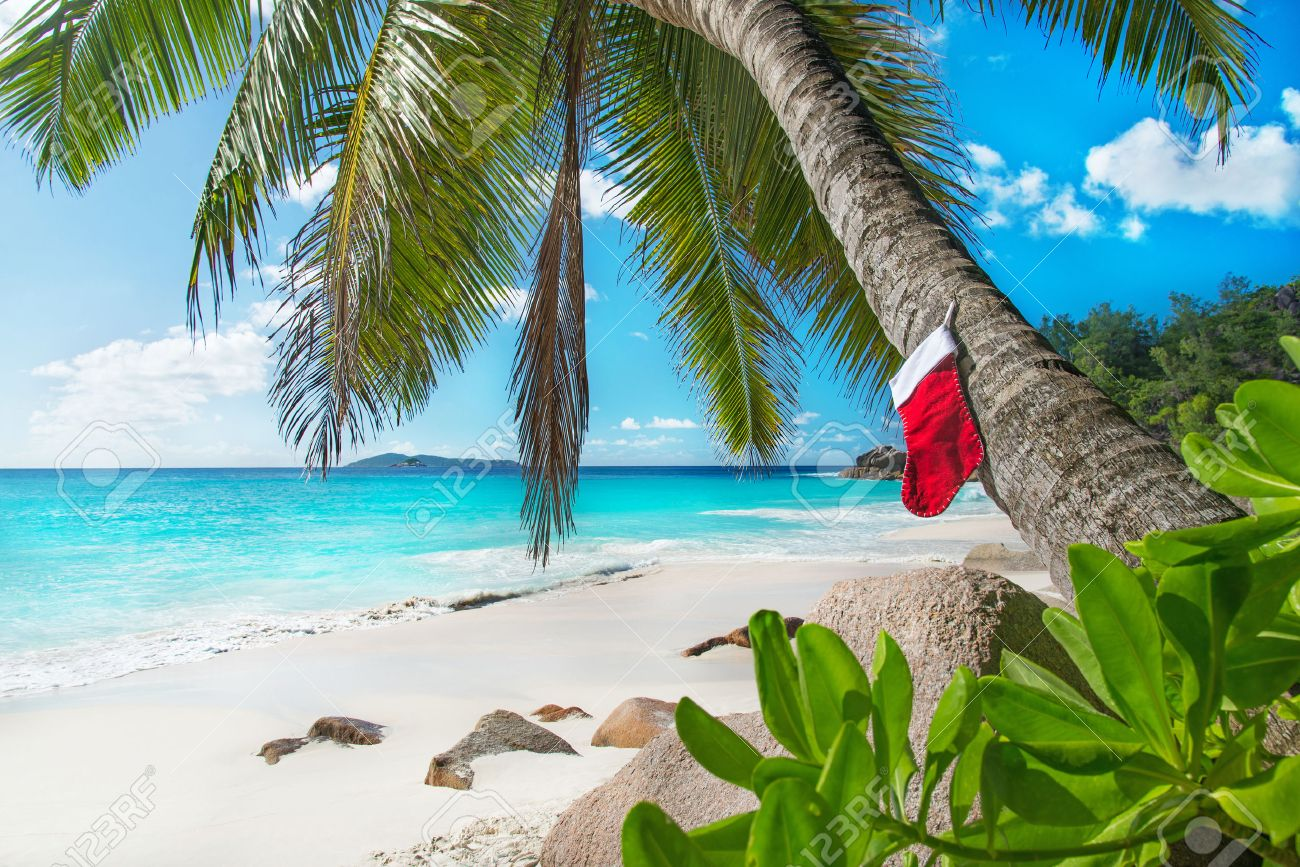 Christmas Sock On Palm Tree At Exotic Tropical Beach. Holiday ...