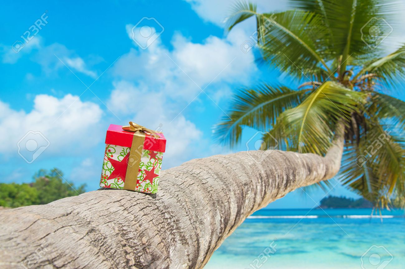 Gift Box With Bow On Coconut Palm Tree At Exotic Tropical Beach ...