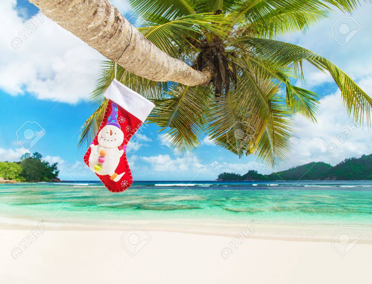Christmas sock on palm tree at exotic tropical beach holiday christmas sock on palm tree at exotic tropical beach holiday concept for new years cards voltagebd