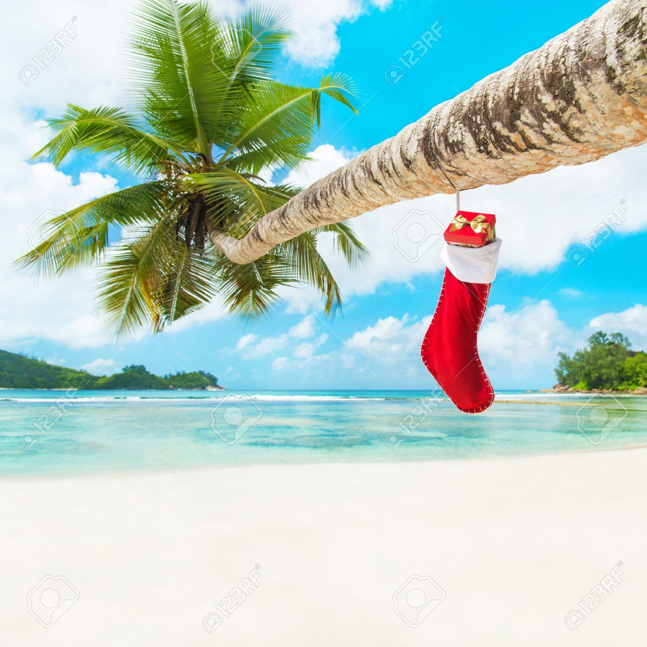 Christmas sock with gifts on palm tree at exotic tropical beach christmas sock with gifts on palm tree at exotic tropical beach holiday concept for new voltagebd