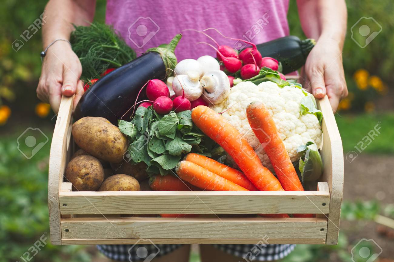 Woman Is Holding Wooden Crate Full Of Vegetables In Garden Harvest