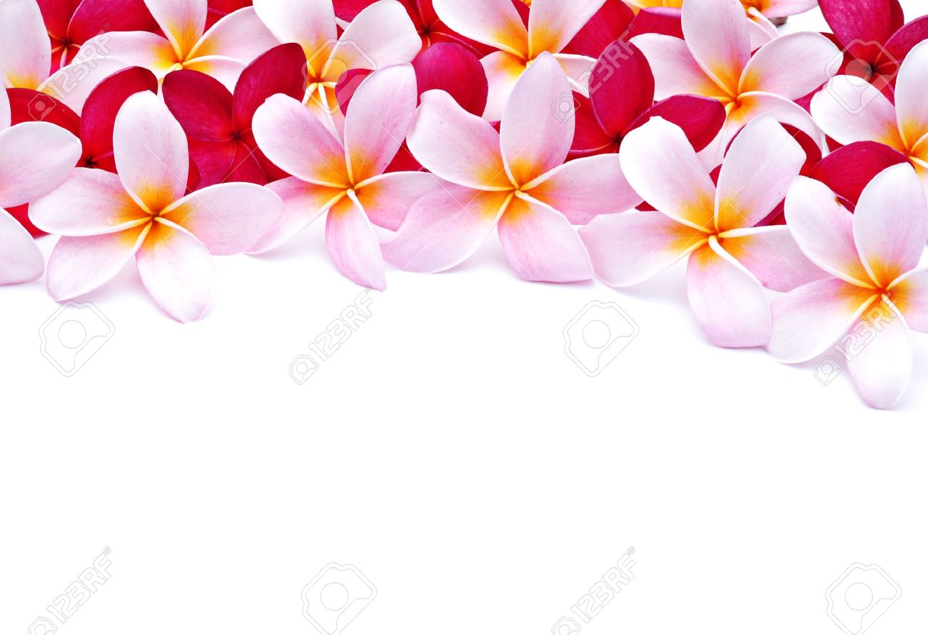 Frangipani Flowers For Design Stock Photo Picture And Royalty