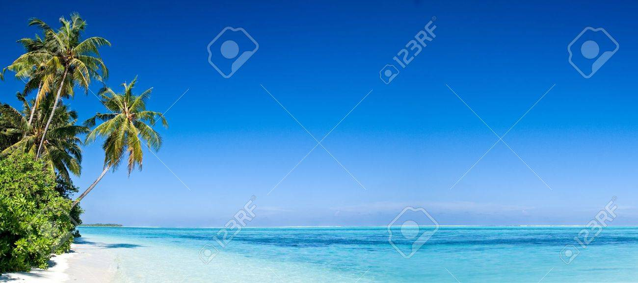 Tropical Beach with Coconut Palm Trees, panoramic view with much copy space - 9547664