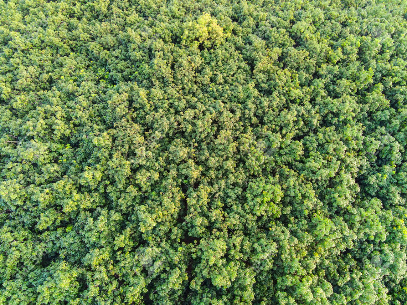 Aerial view forest tree environment forest nature background, Texture of green tree top view forest from above - 173248645