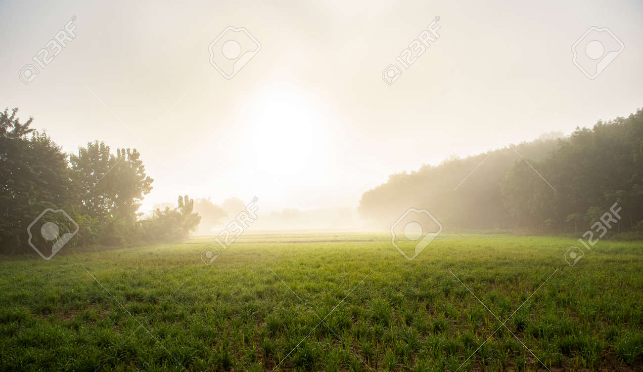 foggy landscape on green field in the morning, nature misty beautiful in the sunny foggy view - 173374753