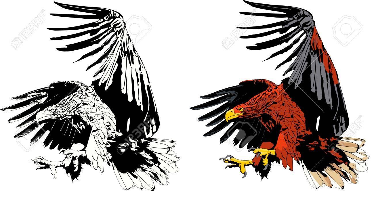 eagle attack Stock Vector - 17364578